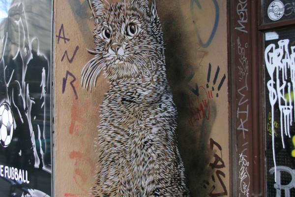 rp_c215-cat-in-a-doorway.jpg