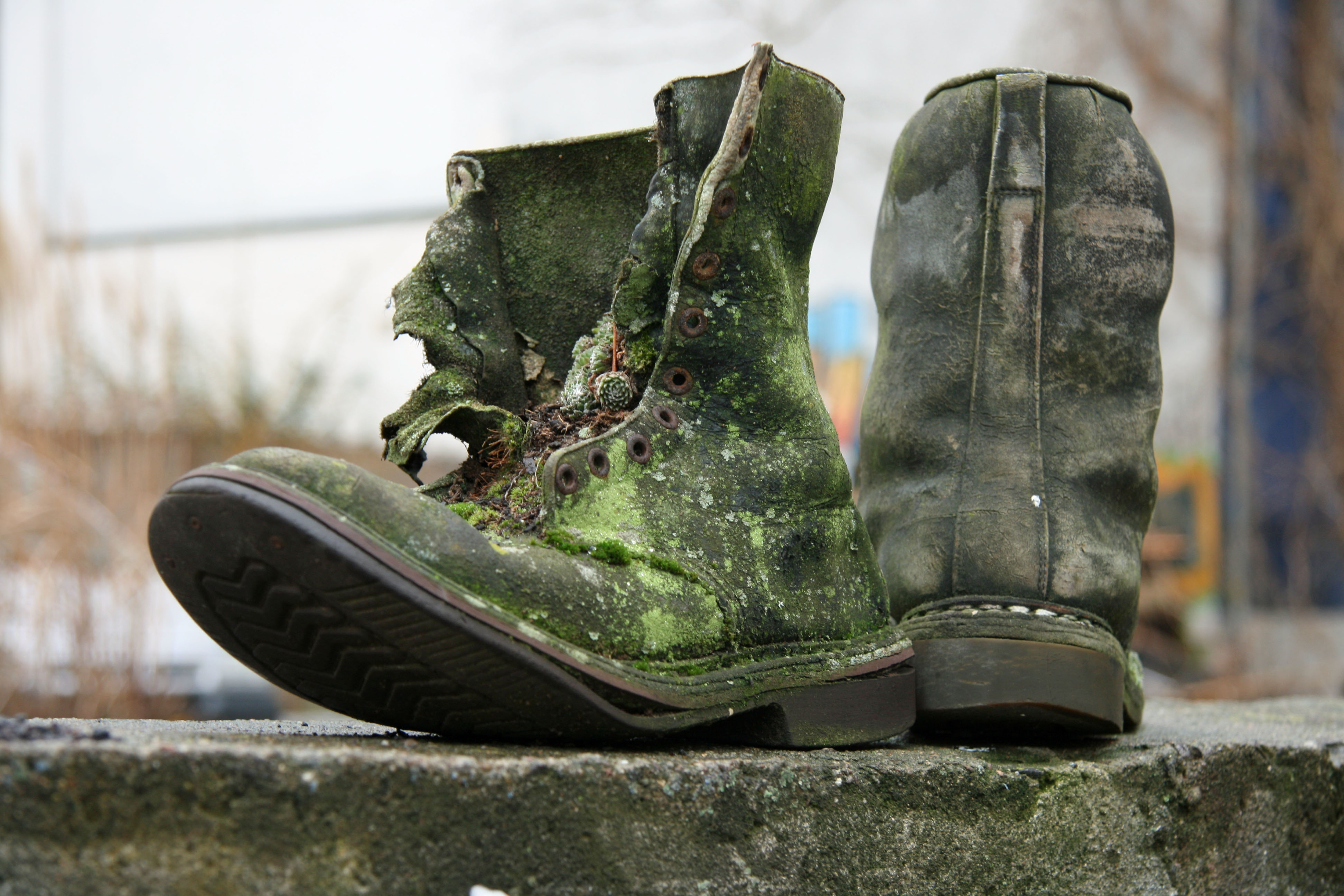 Old boots covered in moss on a wall in Prenzlauer Berg in Berlin