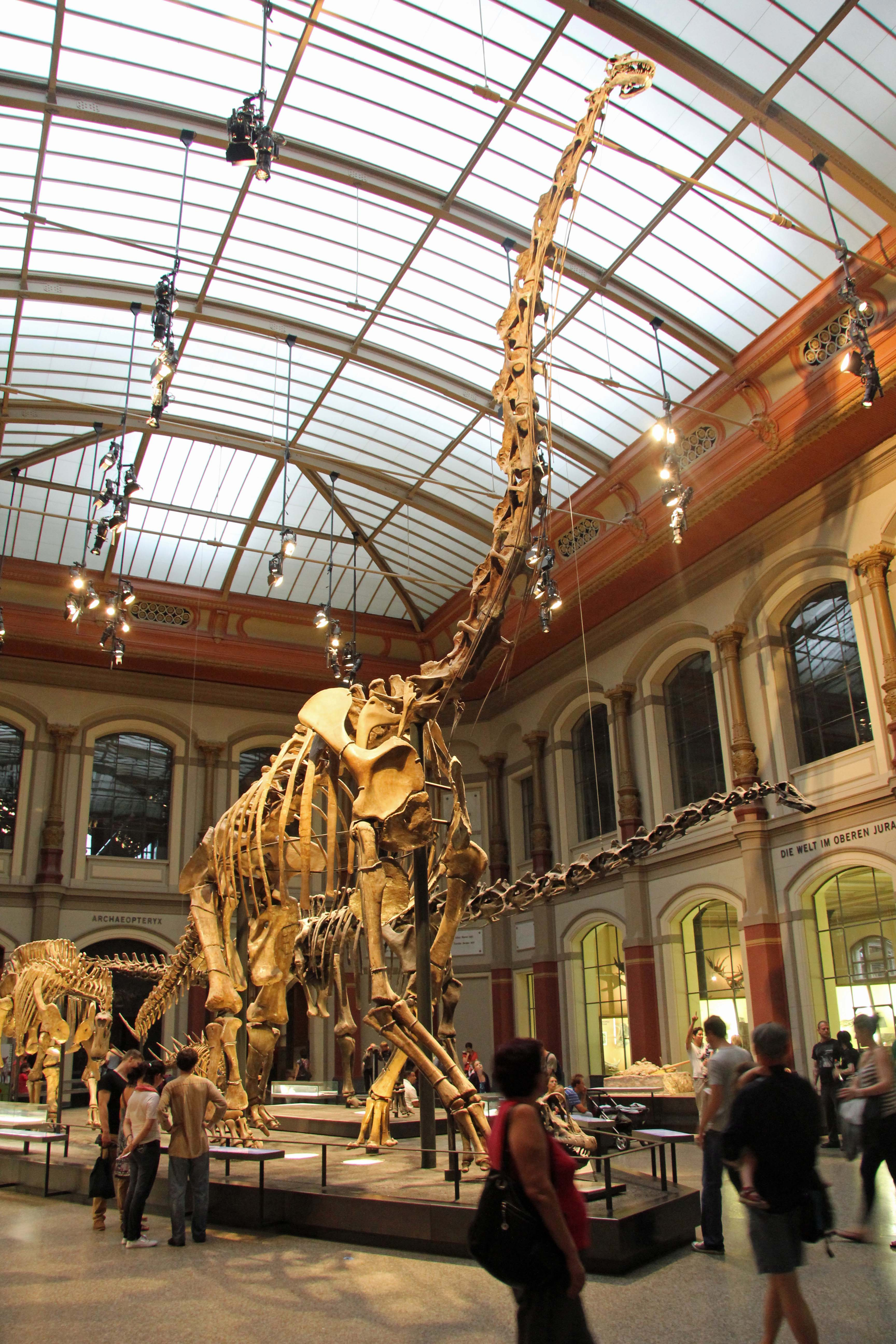 A Brachiosaurus skeleton in the World of Dinosaurs exhibition at the Museum für Naturkunde (Natural History Museum) in Berlin