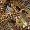 rp_dinosaur-close-up-1024x682.jpg