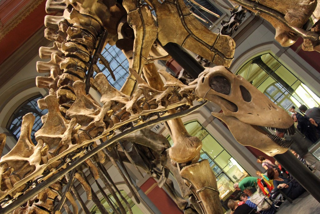 A close up of a skeleton in the World of Dinosaurs exhibition at the Museum für Naturkunde (Natural History Museum) in Berlin