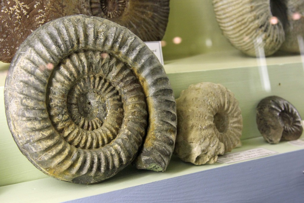 Fossils on display in the Minerals exhibition at the Museum für Naturkunde (Natural History Museum) in Berlin
