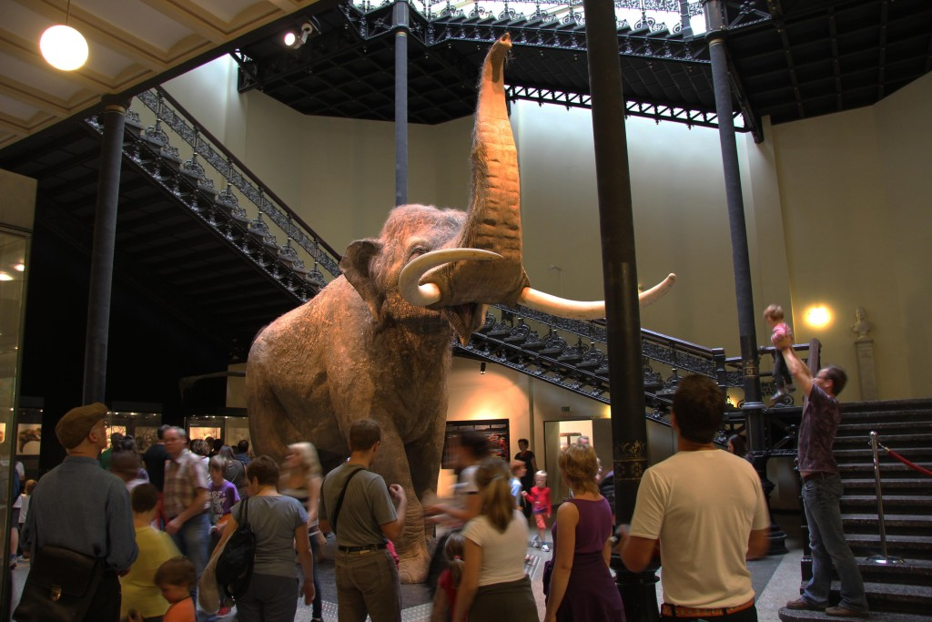 A Straight-Tusked Elephant in the Elefantenreich – Eine Fossilwelt in Europa (Land of the Elephants – A Fossil World in Europe) exhibition at the Museum für Naturkunde (Natural History Museum) in Berlin