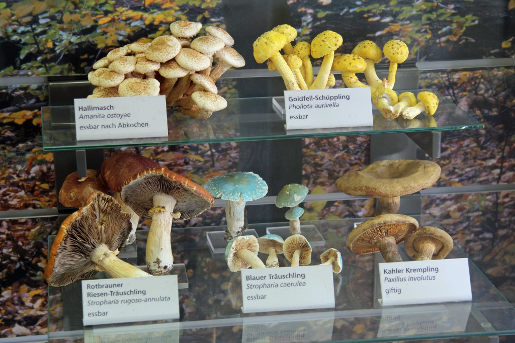 Fungi on display at the Botanical Museum (Botanisches Museum) in Berlin