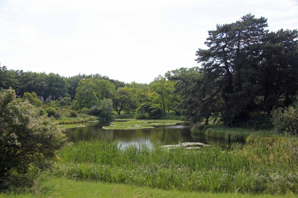 A Lily Pond at the Botanical Garden (Botanischer Garten) in Berlin