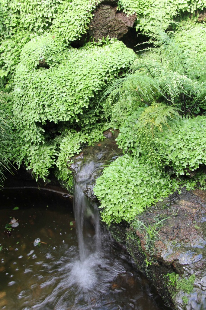 A mini waterfall in the greenhouses at the Botanical Garden (Botanischer Garten) in Berlin