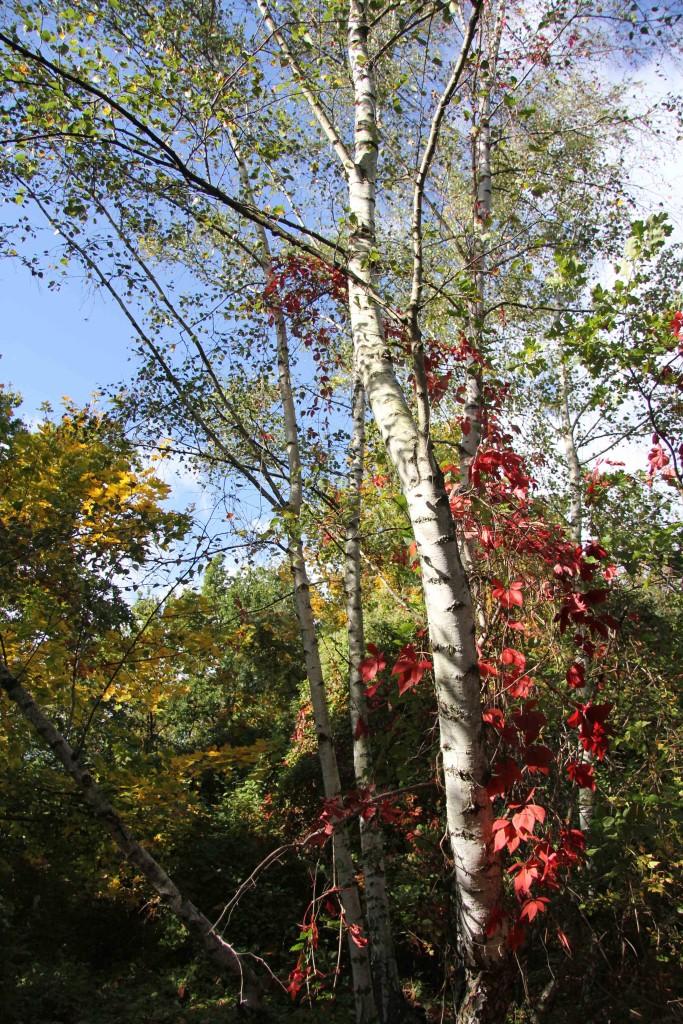 Autumn colours at Natur-Park Schöneberger Südgelände in Berlin
