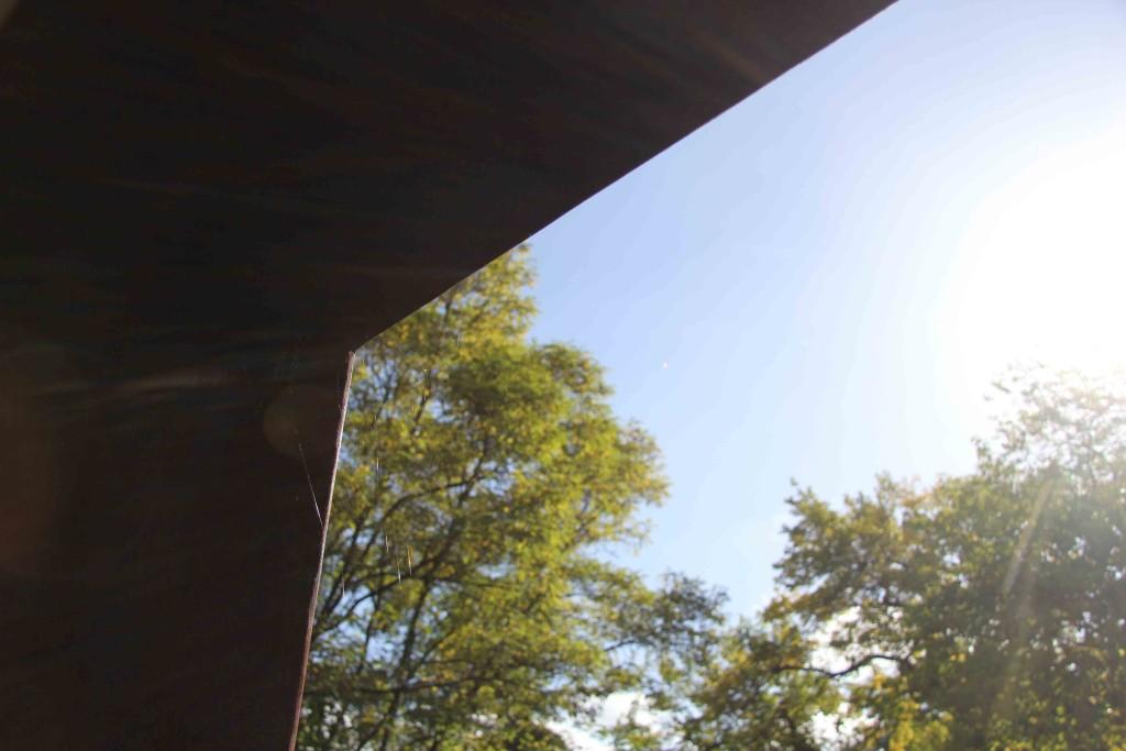 Dappled sunlight through cobwebs at Natur-Park Schöneberger Südgelände in Berlin