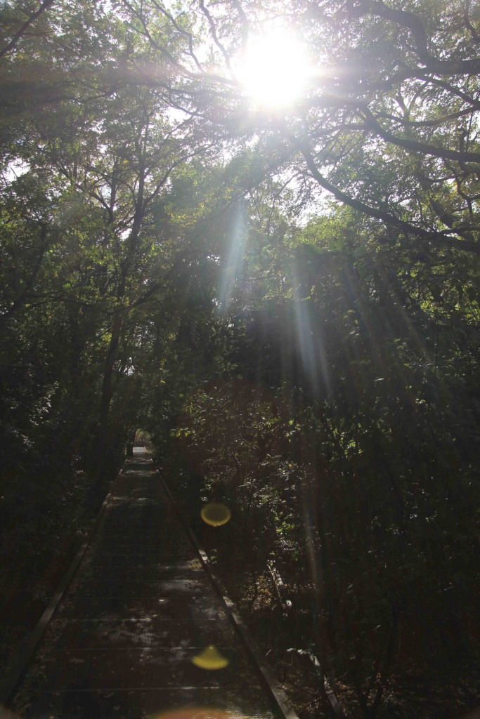 The sun shines through the trees at Natur-Park Schöneberger Südgelände in Berlin