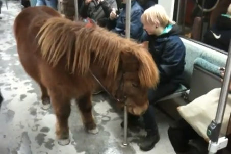 Pony on the Berlin S-Bahn train (screenshot from YouTube video)
