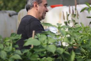 Prinzessinnengarten – An Urban Garden in Berlin