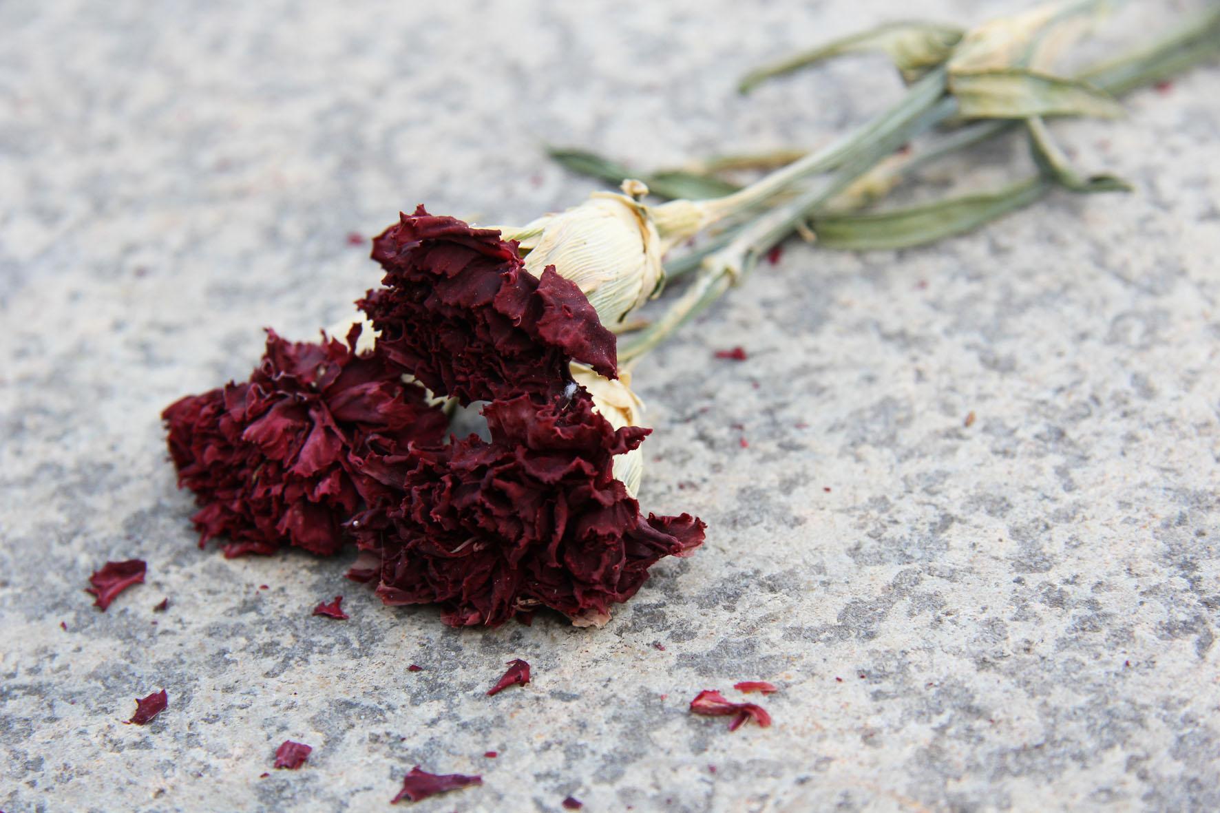 Blumen an dem Sowjetischen Ehrenmal Schönholzer Heide in Berlin
