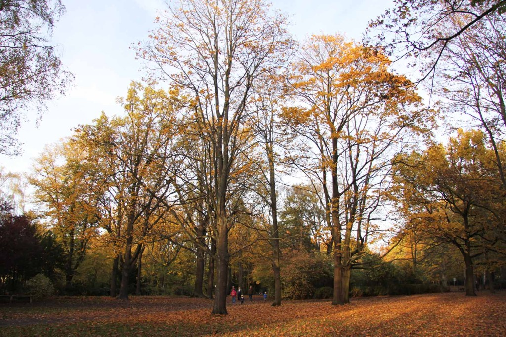 Autumn Foliage at Gemeindepark Lankwitz in Berlin