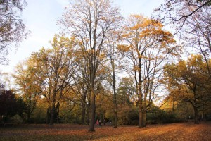 Autumn Colours in Berlin