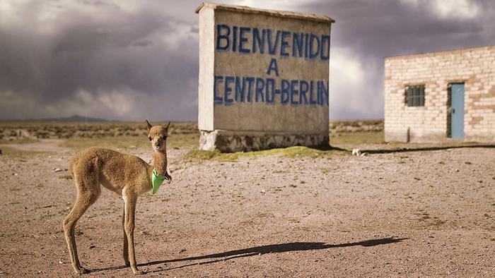 A Llama in Centro Berlin from Worldwide Berlin by Berlin Producers