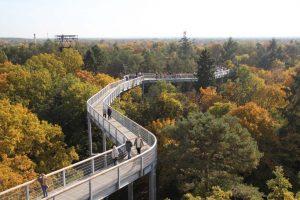 Baumkronenpfad Beelitz-Heilstätten – Treetop Walkway and Abandoned Sanatorium