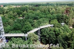 Making of Baumkronenpfad Beelitz-Heilstätten