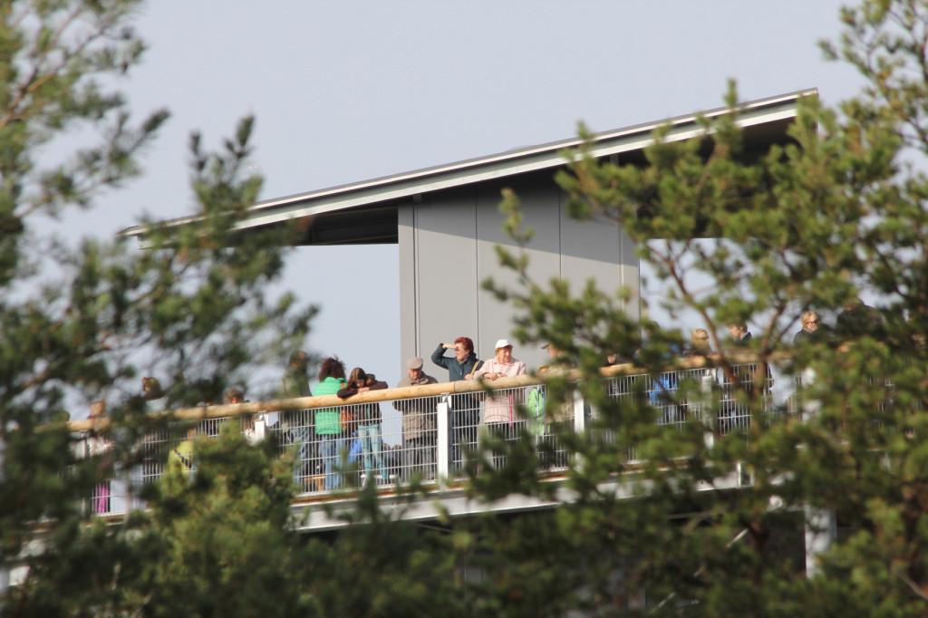 The viewing platform seen through the trees from the treetop walkway of Baumkronenpfad Beelitz-Heilstätten near Berlin