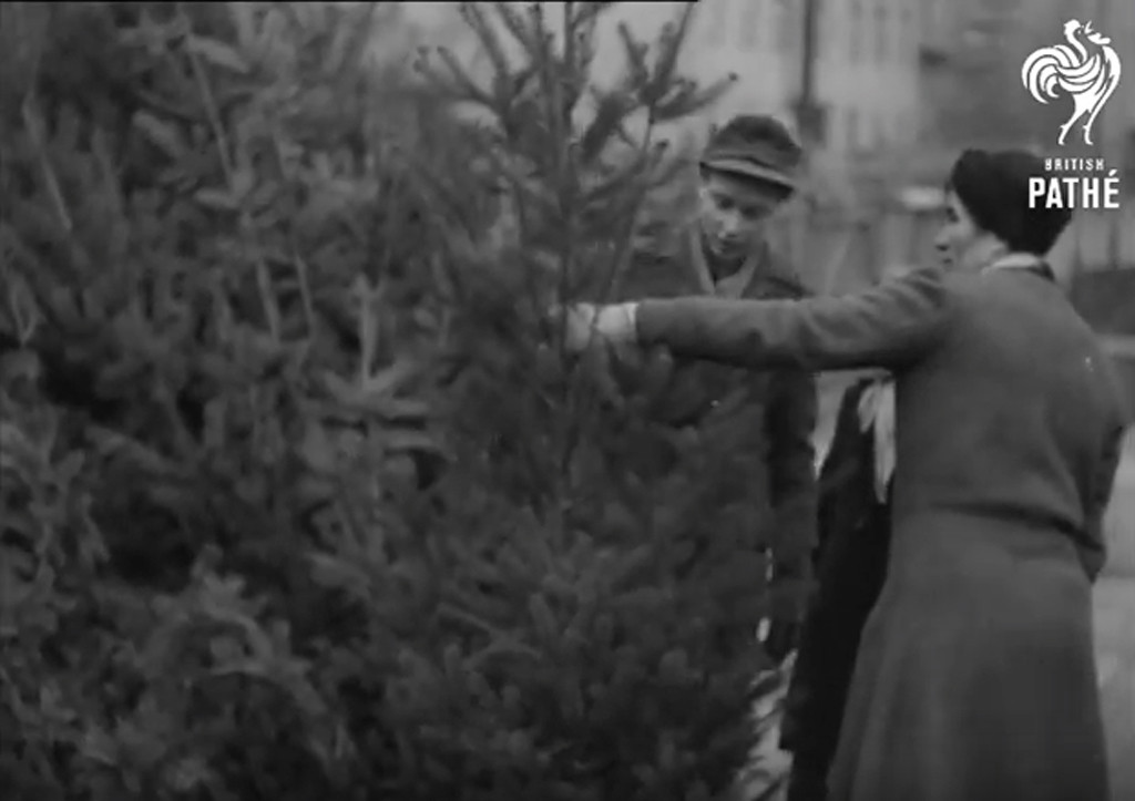 West Berliners select a Christmas tree in 1948 - still from Blockaded Christmas by British Pathé - a film with many scenes of Berlin Christmas 1948