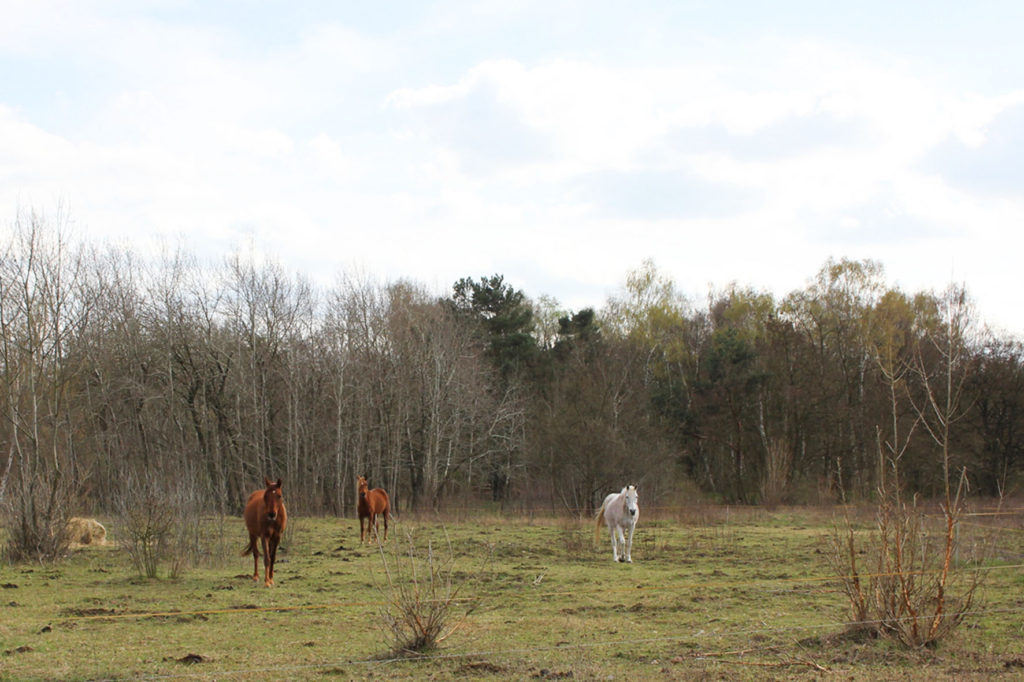 Horses at Parks Range Doughboy City - a former military training ground of the US Army Berlin Brigade